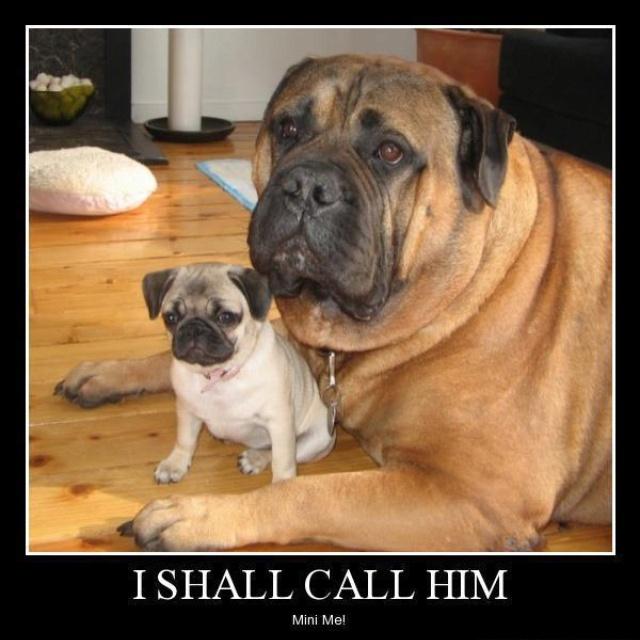 Buddies: Animals, Puppies, Dogs, Mother, Pets, Mini Me, Mastiff, Pugs, Friend