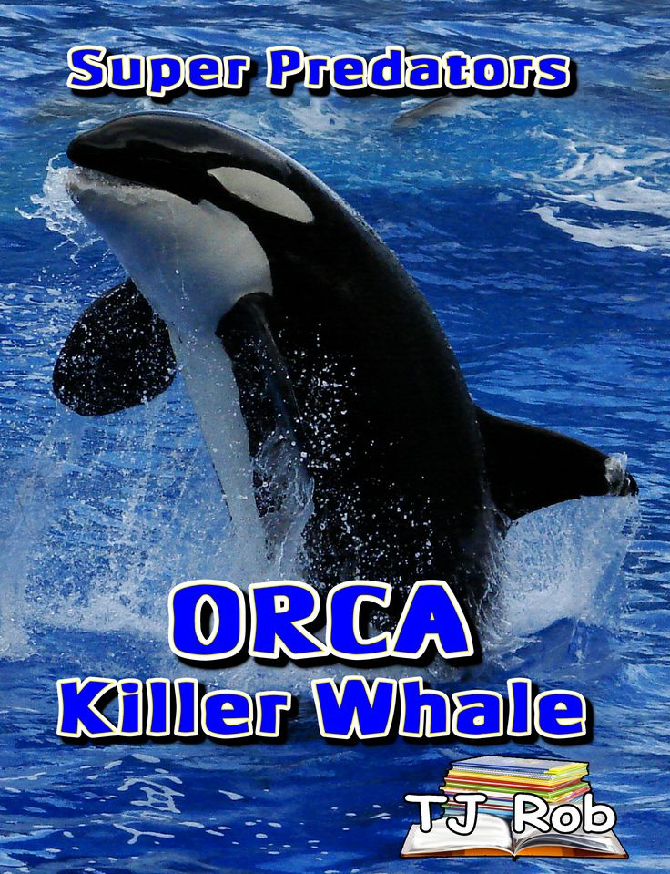 Huge, Impressive, Highly Intelligent, Fast, Fearless, Social, Super Predators are just some of the attributes of these remarkable marine animals - Orca or also called the Killer Whale #orca #marine #predators #kidslit #killerwhale
