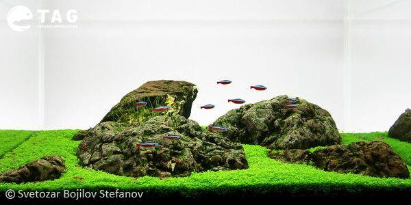 Best 29 Gallon Aquarium by Svetozar Bojilov Stefanov