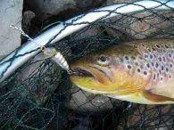 www.mein-Fang.de – Das Online Anglermagazin Berichte - Wie auf Bachforellen angeln...
