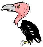 ... La mamma di Mariotta, quella con la permanente ma con i capelli così sottili che le si vede la cute del cranio e sembra un avvoltoio