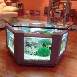 70 best images about awesome saltwater aquariums on for Fish tank dining room table