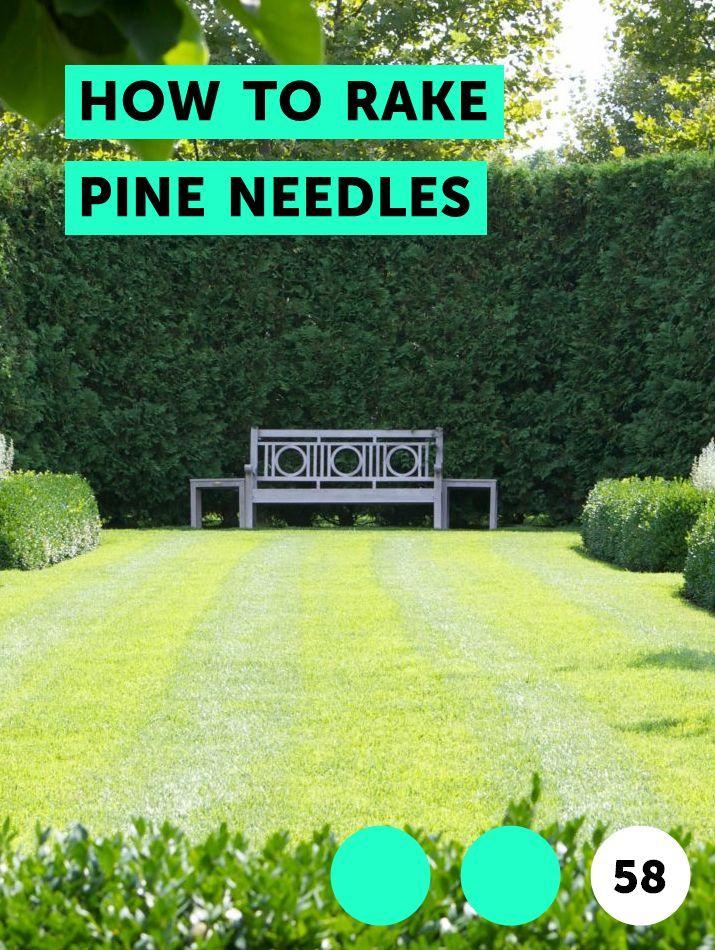 How To Rake Pine Needles With Images Soil Garden Soil Top Soil