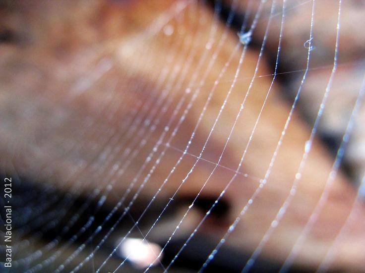Lugar: Concepción, VIII Región del BíoBío | Fecha: Marzo 2012 | Cámara: Canon Powershot A720 is