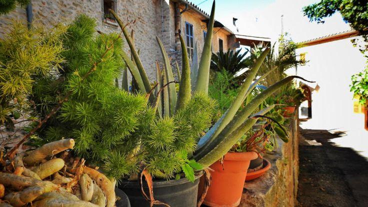 Randa, wunderschönes Mallorca im März