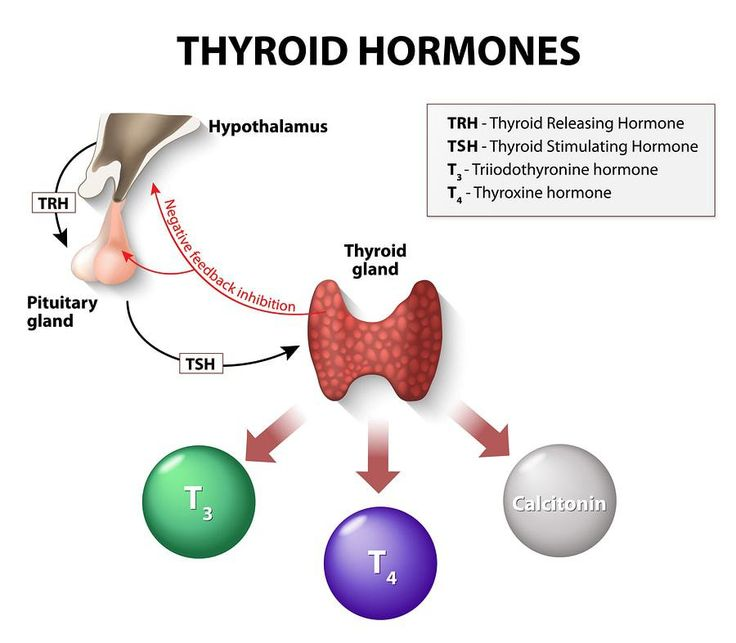 Thyrotropin-releasing hormone (TRH), the Master Regulator of the Thyroid Axis (HPT), and 15 Factors that Increase or Decrease TRH Levels