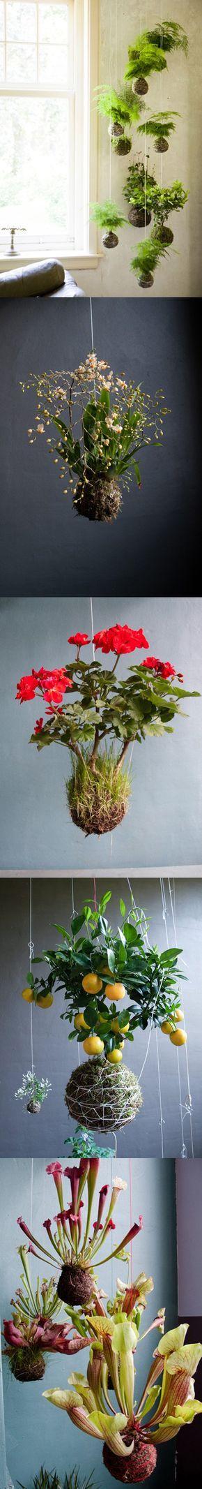 Wooaaahh!! Hängende Pflanzen ohne Topf! Sieht Hobbit-mäßig gemütlich aus! Wir wissen allerdings nicht, ob das nur in heißen Ländern mit hoher Luftfeuchtigkeit funktioniert...?