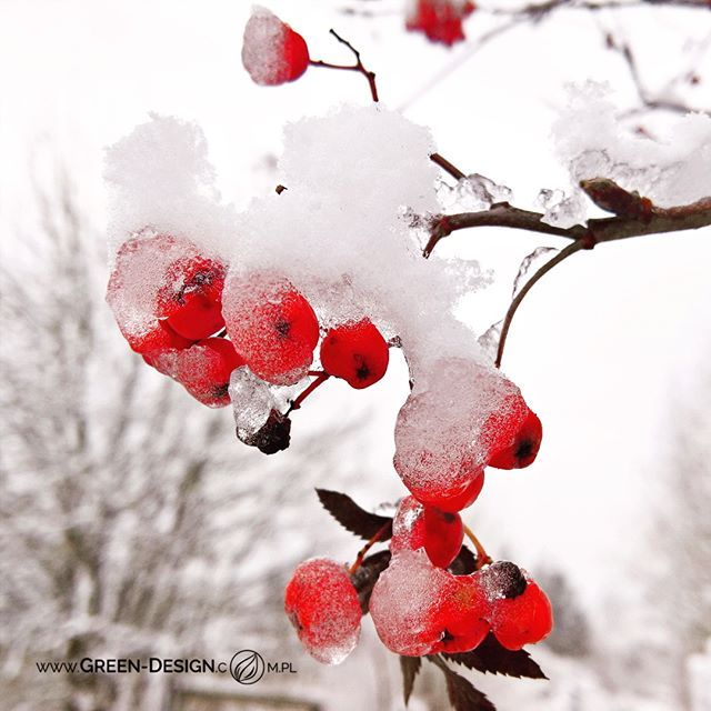 #Garden is #always #beautiful 😊 even in #winter 😊 check this on our #blog www.green-design.com.pl  #architektkrajobrazu #architekturakrajobrazu #landscapearchitect #lanscapearchitecture #poland #bialystok #photography #GreenDesign_Blog #InstaDaily #ilovemyjob