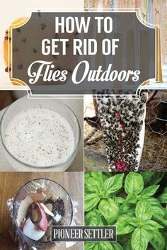 Check out How to Get Rid of Flies Outdoors Naturally at https://pioneersettler.com/get-rid-flies-outdoors/