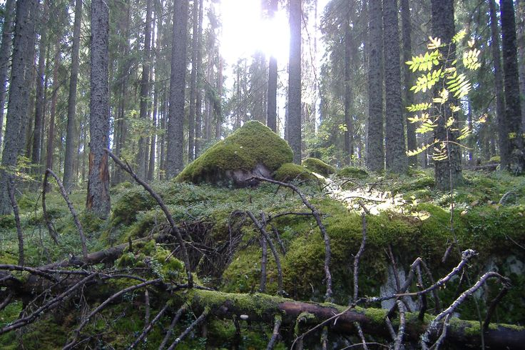 FINNISH FOREST ( E L )