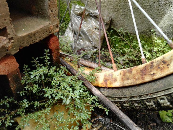 #bicicleta #bicycle  #plantas #plants #old #vieja #oxido #oxide