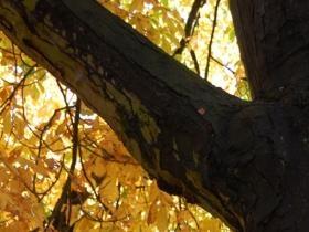 Golden Autumn Leaves file-15.jpg photo