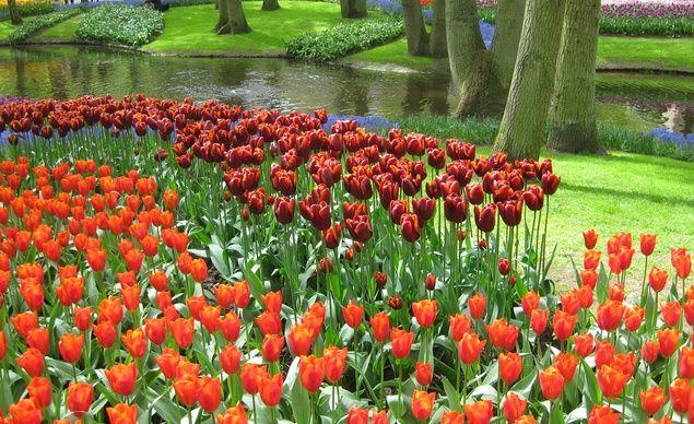 Best 25 Tulip Garden Amsterdam Ideas On Pinterest
