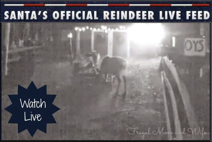 Frugal Mom and Wife: FREE Santa's Official LIVE Reindeer Cam!