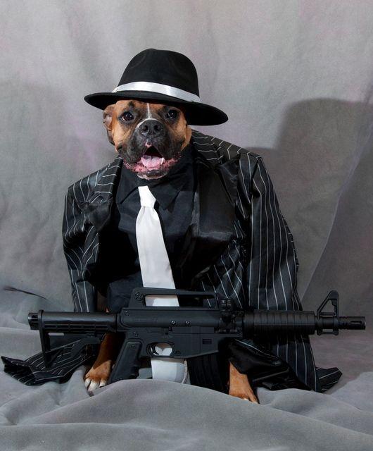 картинки животных гангстеров знакомые нам предметы