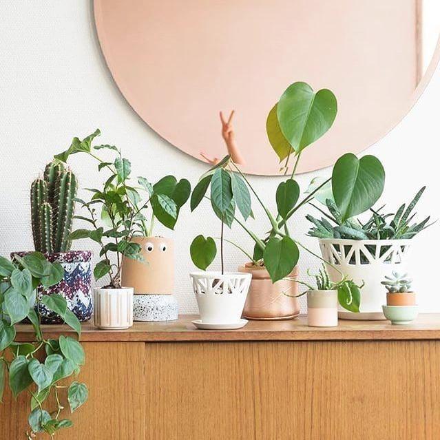 We adore this lovely sideboard arrangement by @joelixjoelix #repost #sundayshelfie .-------------------------------- #plantify #urbanplantery #letlifein #plantspiration #plantgang #indoorplantclub #plantporn #urbanjungle #urbanjunglebloggers #capetownliving #indoorplants #interiorrewilding #plantsmakepeoplehappy #indoorgarden#sundayshelfie #plantshelfie #plantshelfiesunday #interiordesign #interiordecor