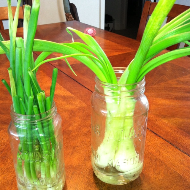 how to grow green onions in a jar
