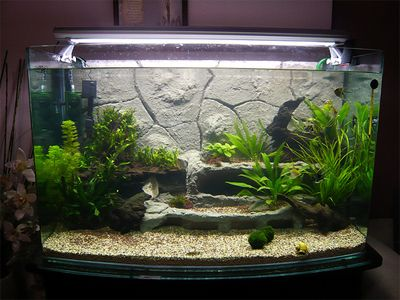 Fish tank ideas learning point 5 mixing cement with the for Fish tank background ideas