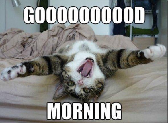adult funny good morning quotes | LOL-2014-Good-morning.jpg