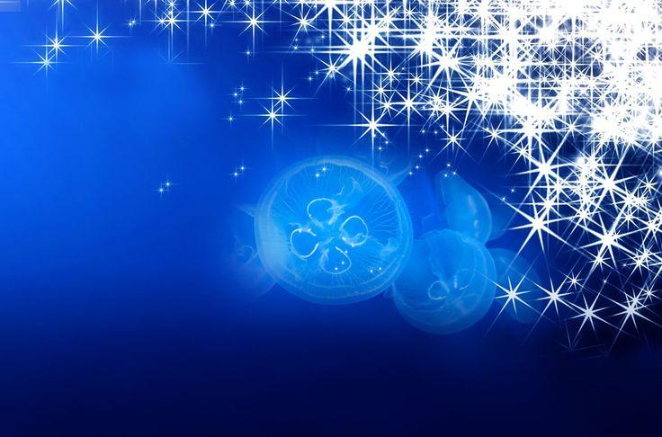 #AcquariodiGenova #christmas #jellyfish  http://www.acquariodigenova.it/