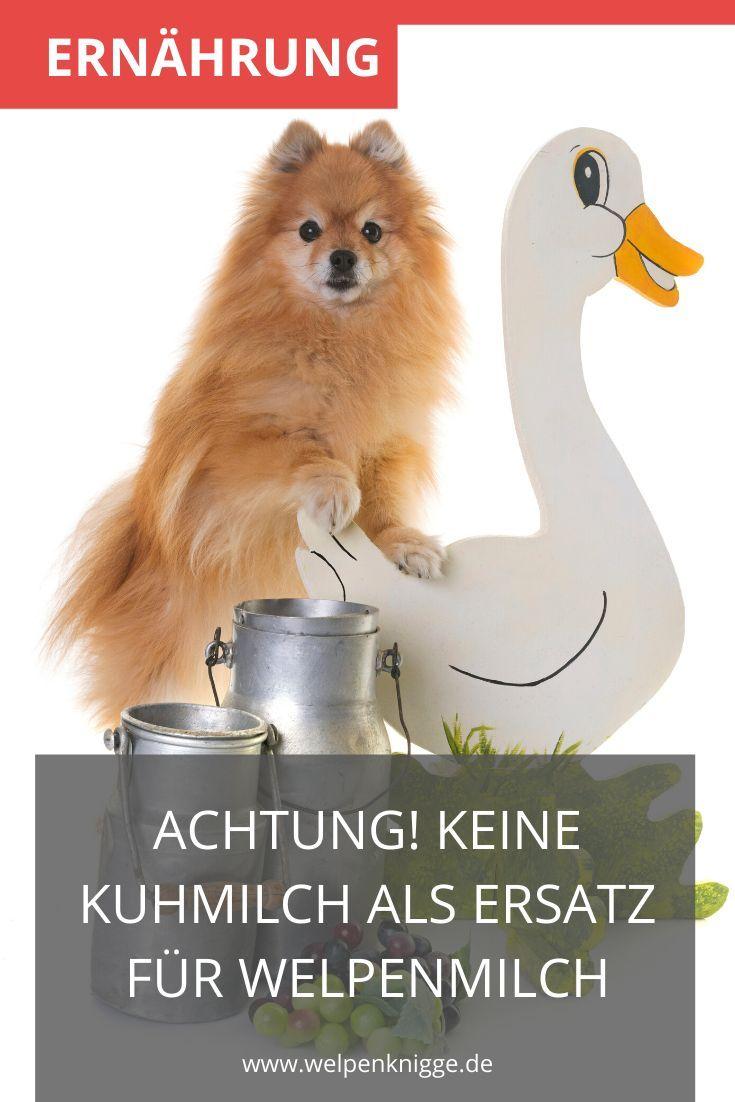 Pin Auf Hund Gesund