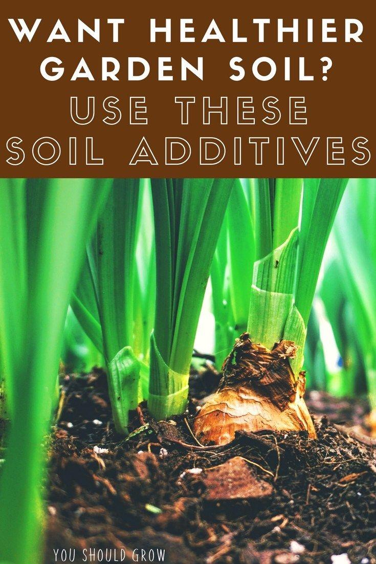 5 Weird Garden Soil Amendments For A Healthier Vegetable Garden