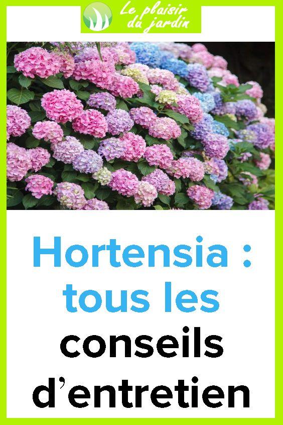 Hortensia : tous les conseils d'entretien | Planter hortensia, Taille des hortensias, Hortensia ...