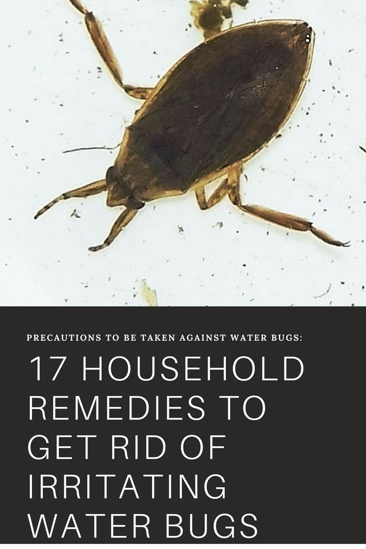17 Remedies On How To Get Rid Of Water Bugs Naturally Fast Household Remedies Water Retention Water Retention Remedies