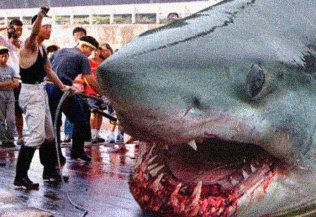 Real Images Megalodon Shark Caught | megalodon shark