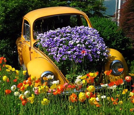 Purple flowers in a yellow VW