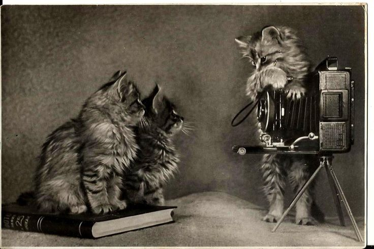 Kittens, camera and book - Russian Vintage Photo Postcard print 1955 by LucyMarket on Etsy