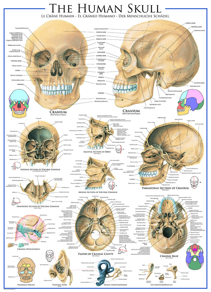 10 best medical charts - discovering the human body images on, Skeleton