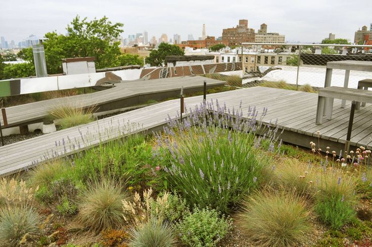 An image of a green roof planted with native grasses. Lovely in both summer and winter, as the grass in its dormant stage remains visually compelling.