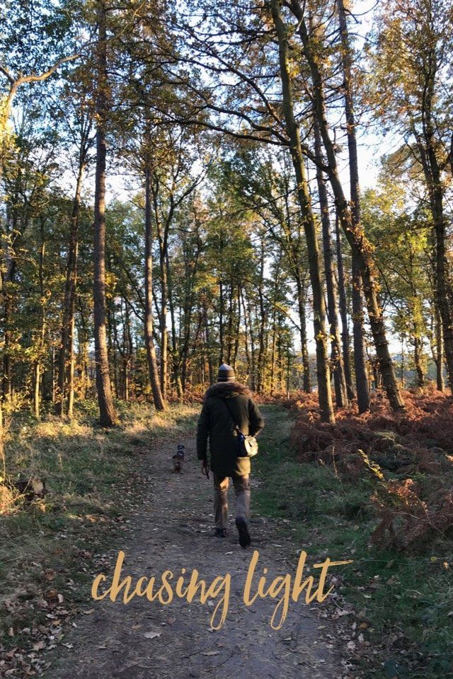 A late autumn walk at Dalkeith Country Park on @stellerstories.