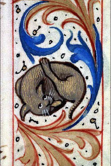 * Ms 6881, f. 30 - Livre d'heures à l'usage de Chalon, bordure extérieure ; bordure habitée ; Chat faisant sa toile