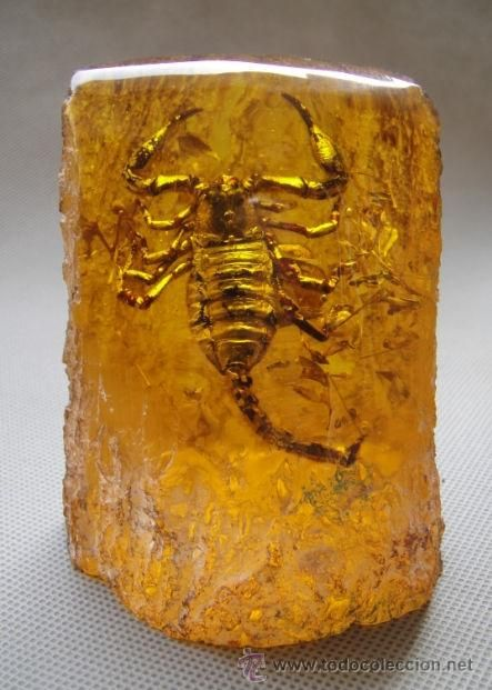 619 Best Baltic Gold Images On Pinterest Baltic Amber