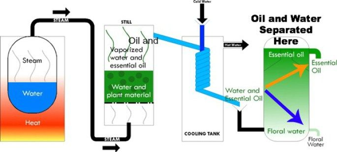 Steam Distillation of Hydrosols and Essential Oils