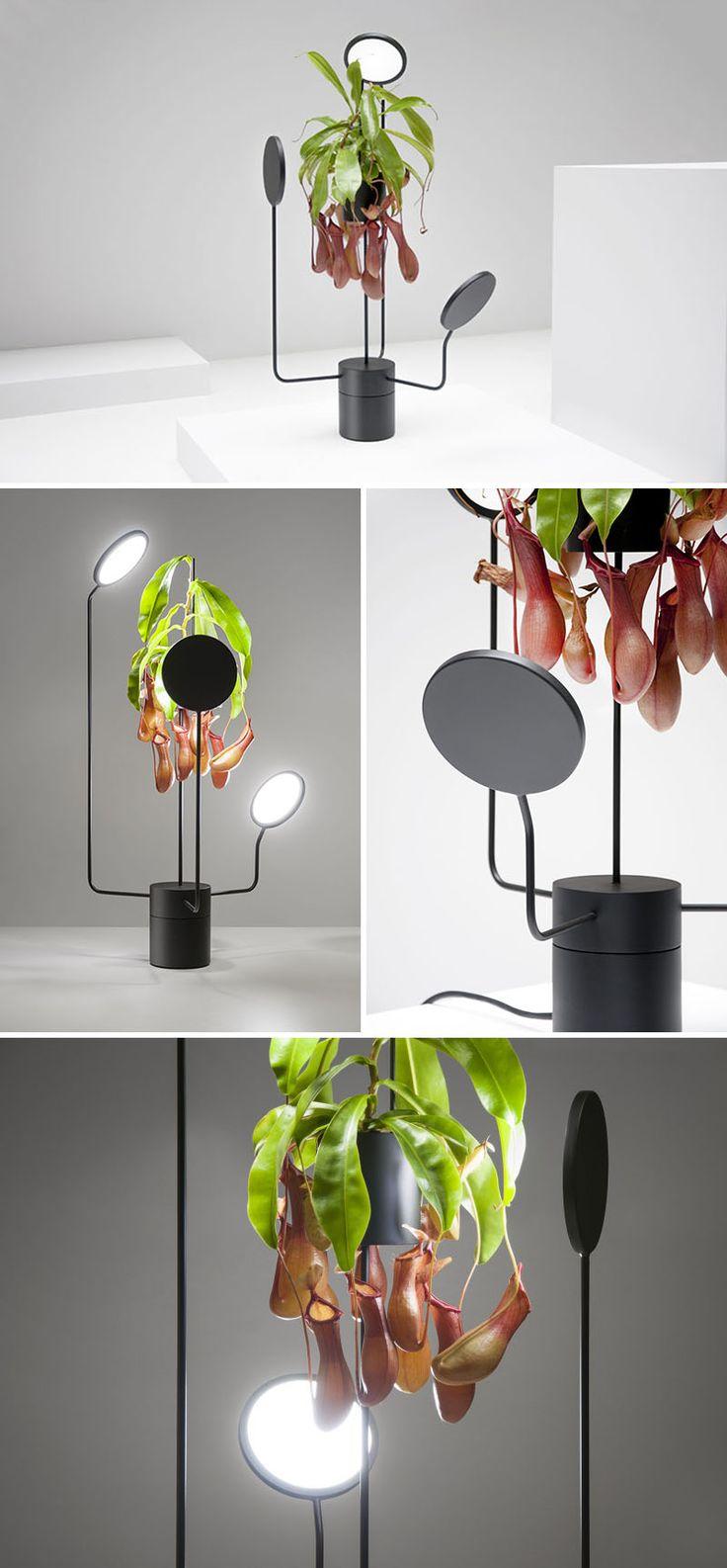 53 Indoor Garden Idea U2013 Hang Your Plants From The Ceiling U0026 Walls