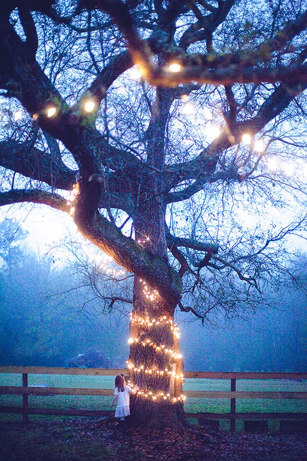 Best 10 Outdoor tree lighting ideas on Pinterest Outdoor