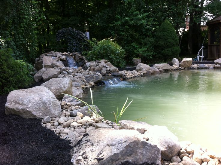 15'x30' swimming pool converted to a koi pond. Pic taken right after construction