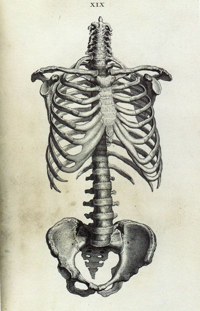 81 best anatomy for artists | skeletons images on pinterest, Skeleton