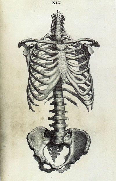 266 best images about bones on pinterest | human anatomy, skeleton, Skeleton