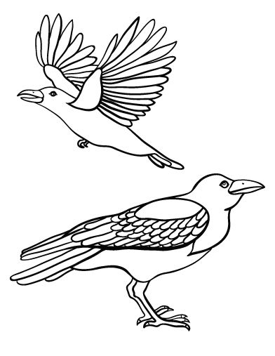 Printable Crow Coloring Page Free PDF Download At