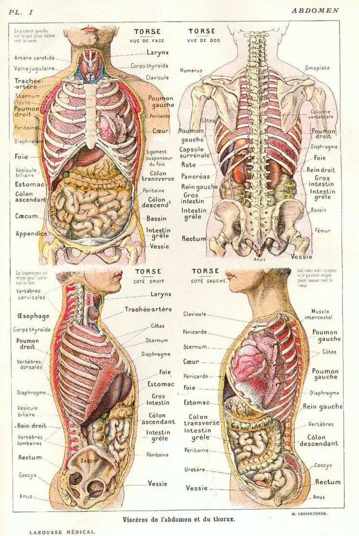 35 best ANATOMIE images on Pinterest | Anatomy art, Human body ...