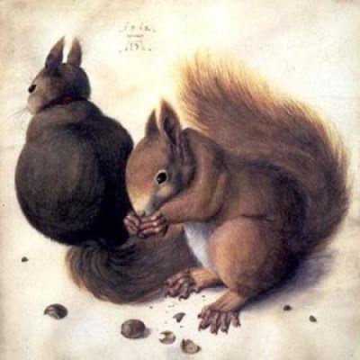 Albrecht Dürer – Dois Esquilos – 1492