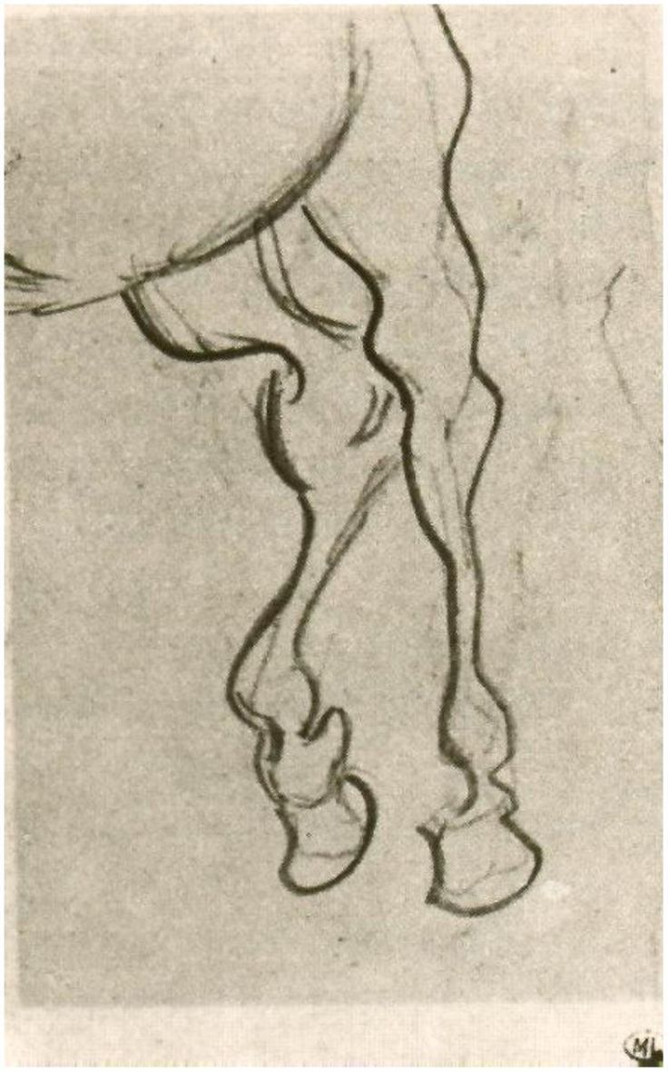 It is a picture of Magic Horse Legs Drawing