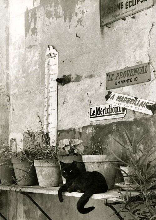 Le chat provençal from Paris entre chats, 1955 (Willy Ronis attributed)Also