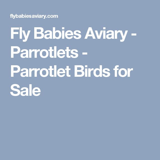 Fly Babies Aviary - Parrotlets - Parrotlet Birds for Sale