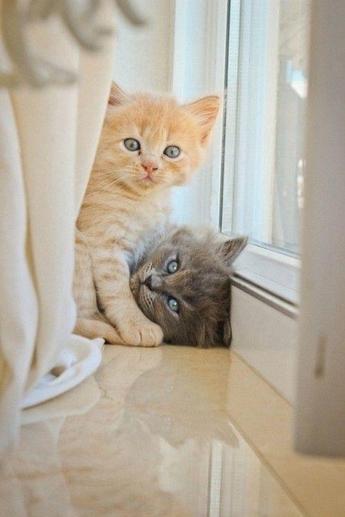 Kittens! #cute