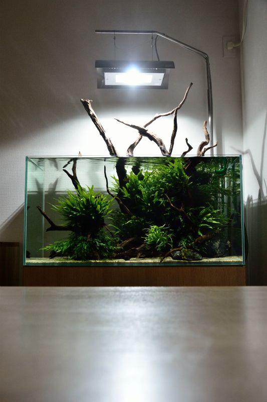419 besten aquascape bilder auf pinterest planted aquarium vivarium und aquarium felsen. Black Bedroom Furniture Sets. Home Design Ideas